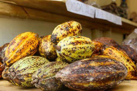 Grind Robusta Coffee-Sierra Leone-Produce-Monitoring-Board-Local-Coffee-Cocoa-Kenema-8
