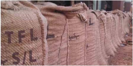 Tropical Farms Limited Sierra Leone cocoa